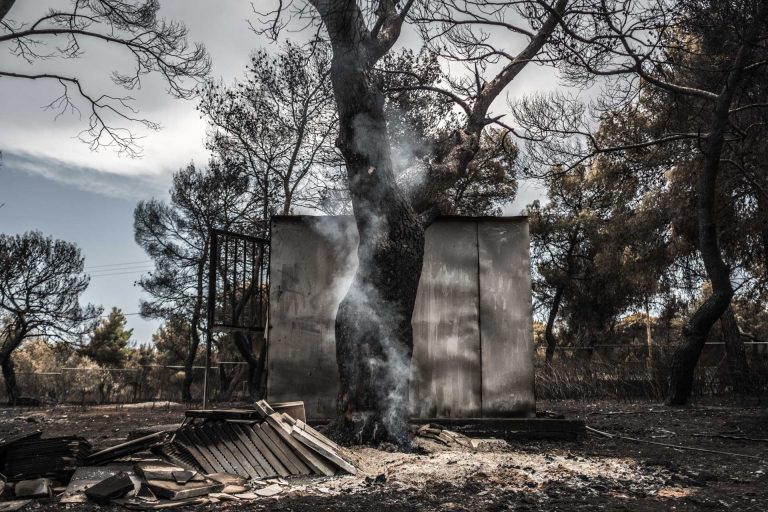 Mati, Athens, Greece, | November 27, 2018 | Photo #1 | A smoking tree is a reminder of how recent the Athens forest fires have been. Photo: Joris van Gennip