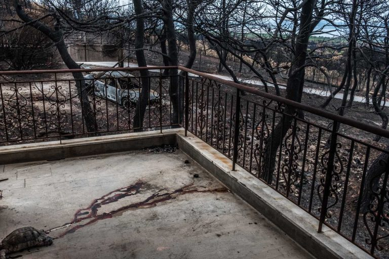 Mati, Athens, Greece, | November 28, 2018 | Photo #4 | Some home-owners had to leave their pets or animal behind while escaping the fast approaching fires. Photo: Joris van Gennip